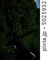 ほたる ゲンジボタル 螢の写真 5025932
