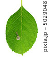 かたつむり 蝸牛 葉の写真 5029048