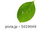 かたつむり 蝸牛 葉の写真 5029049