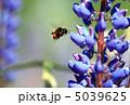 Bumblebee Near Flower 5039625