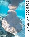 しっぽ ほ乳類 マナティの写真 5056508