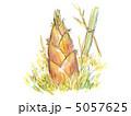 筍 竹の子 タケノコのイラスト 5057625