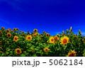 青空とひまわり畑 5062184
