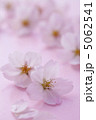 さくら 花 桜の写真 5062541