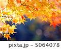 もみじ 植物 葉の写真 5064078