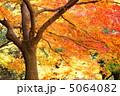 もみじ 植物 葉の写真 5064082