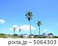 椰子の木 ヤシ ヤシの木の写真 5064303