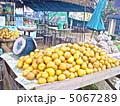 マーケット 市場 露店の写真 5067289