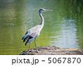 サギ 鷺 青鷺の写真 5067870