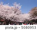 上野公園の花見 5080953