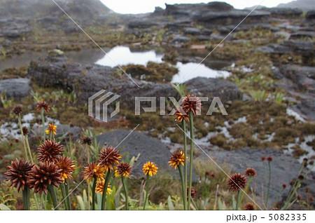 ロライマ山頂の風景 5082335