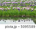 小雨降る水無月園(県立相模原公園) 5095589