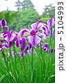 三渓園の花菖蒲 5104993
