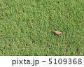 芝生と枯葉 5109368