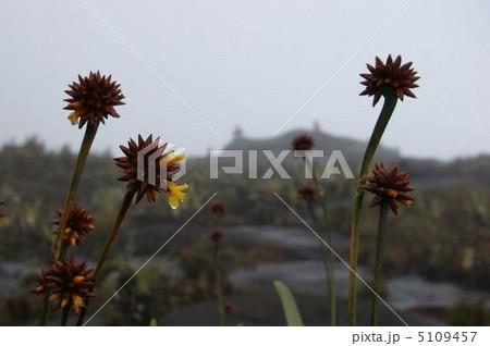 ロライマの山頂の風景 5109457