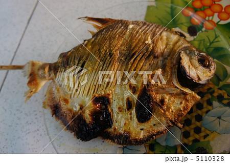 アマゾンの魚パク 5110328