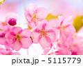 早春 河津桜 カワヅザクラの写真 5115779