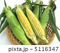 トウモロコシ 5116347