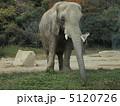 ゾウ 5120726