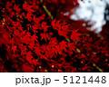 紅葉 5121448