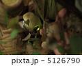 ヘイケボタル ほたる 蛍の写真 5126790