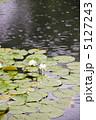 睡蓮 池 雨降りの写真 5127243