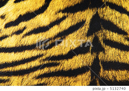 Imitation of tiger leather as a backgroundの写真素材 [5132740] - PIXTA