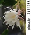 ゲッカビジン 月下美人 花の写真 5154238