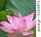 古代ハスの花とトンボ 5164971