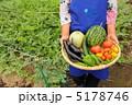 夏野菜 野菜セット 夏野菜セットの写真 5178746