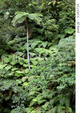 西表島の森林 5183710