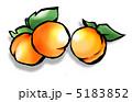 杏子 アンズ アプリコットのイラスト 5183852