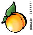 杏子 アンズ アプリコットのイラスト 5183854