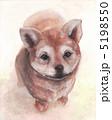 子犬 仔犬 しばけんのイラスト 5198550