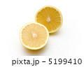 柑橘系 グレープフルーツ 果物の写真 5199410