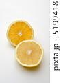 柑橘系 グレープフルーツ 果物の写真 5199418