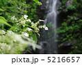 滝と山アジサイ 5216657