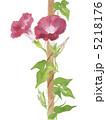 花 朝顔 アサガオのイラスト 5218176