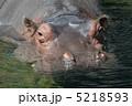 草食動物 脊椎動物 カバの写真 5218593