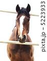 馬の鼻筋・縦位置 5223933
