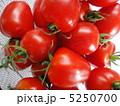 トマトベリー 5250700