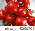 トマトベリー 5250704