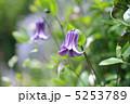 蔓性植物 篭口 植物の写真 5253789
