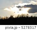 鶴 丹頂 タンチョウの写真 5278317