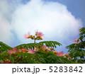 合歓木 ねむのき 合歓の木の写真 5283842