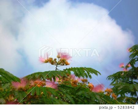満開の合歓木と雲 5283842
