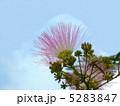 合歓木 ねむのき 合歓の木の写真 5283847