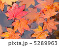 かえで 葉っぱ もみじの写真 5289963