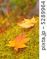 かえで 落ち葉 紅葉の写真 5289964