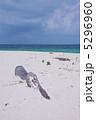 白いビーチと流木 5296960